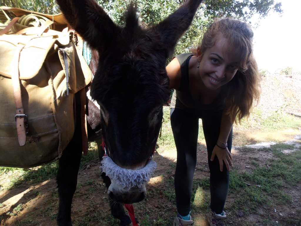 Donkey Catalonia hiking