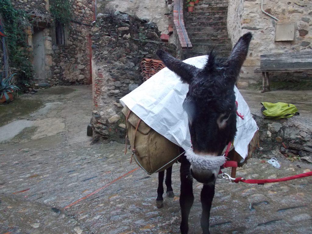 Donkey trekking Catalonia