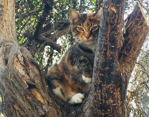 cat on a tree donousa
